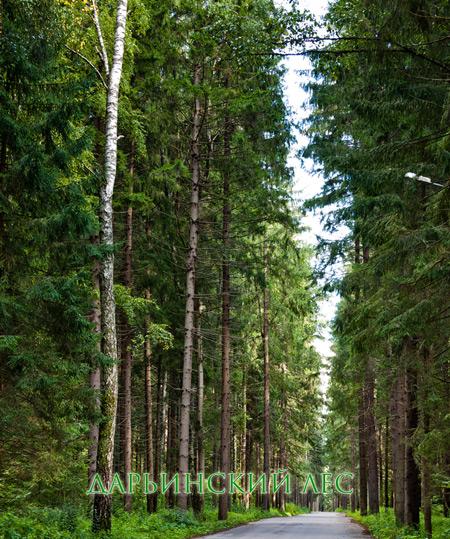 Дарьинский лес